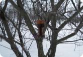 Прочее: Кормушка для птиц из двухлитровых бутылок