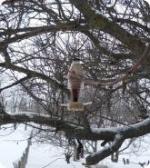 Прочее: Готовая кормушка для птиц на дереве