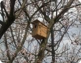 Сад и огород: Готовый скворечник из QSB на дереве