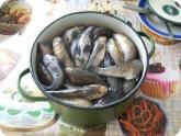 Кулинария: Бычки промытые для засолки