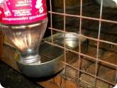 Животноводство и птицеводство: Поилка для кроликов с водой в клетке