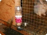 Животноводство и птицеводство: Поилка для кроликов в клетке