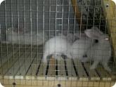 Животноводство и птицеводство: Кролики в клетке